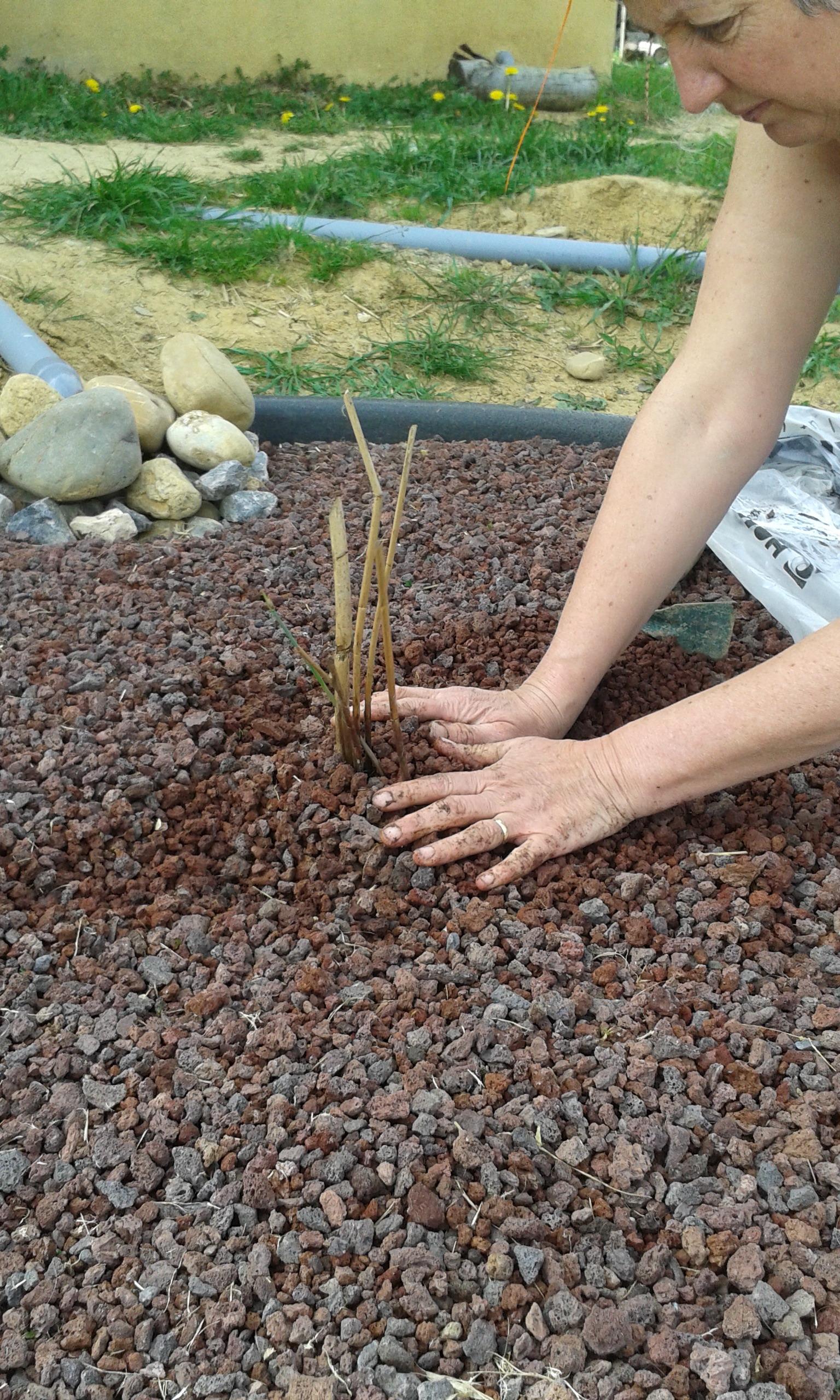 en route par les plantes de la phytoepuration maison paille porteuse nebraska 2009. Black Bedroom Furniture Sets. Home Design Ideas